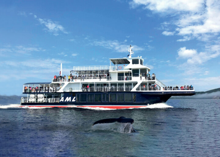 Whale watching cruise aboard boat in Quebec